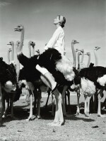 NORMAN PARKINSON | Wenda and Ostriches, 1951