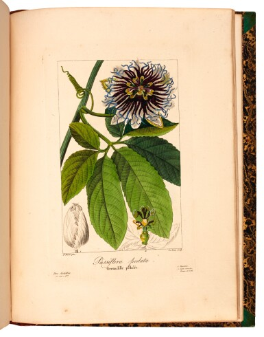 View 3. Thumbnail of Lot 345. Bessa. Flore des jardiniers, amateurs et manufacturiers. 1836. 2 volumes.