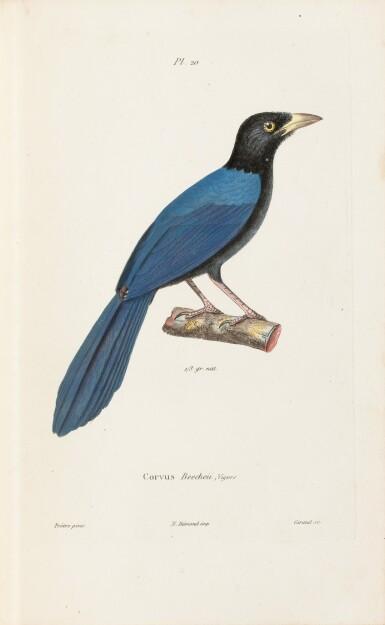 View 10. Thumbnail of Lot 215. LAPLACE. Voyage autour du monde de l'Inde et de Chine. 1833-1840. 7 volumes, dont 2 atlas et Zoologie..