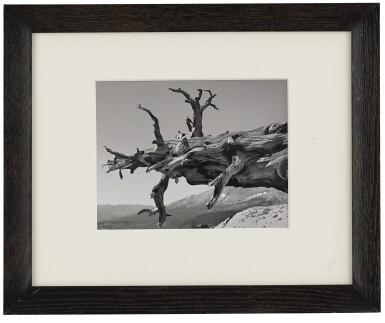 View 2. Thumbnail of Lot 89. 'Fallen Tree, Kern River Canyon' (Sequoia National Park, California).