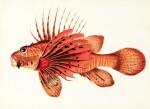 Bennett | Fishes found on the Coast of Ceylon, 1830
