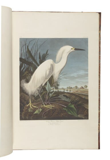 View 12. Thumbnail of Lot 250. JOHN JAMES AUDUBON | The Birds of America; from Original Drawings by John James Audubon. London: Published by the Author, 1827–1838.