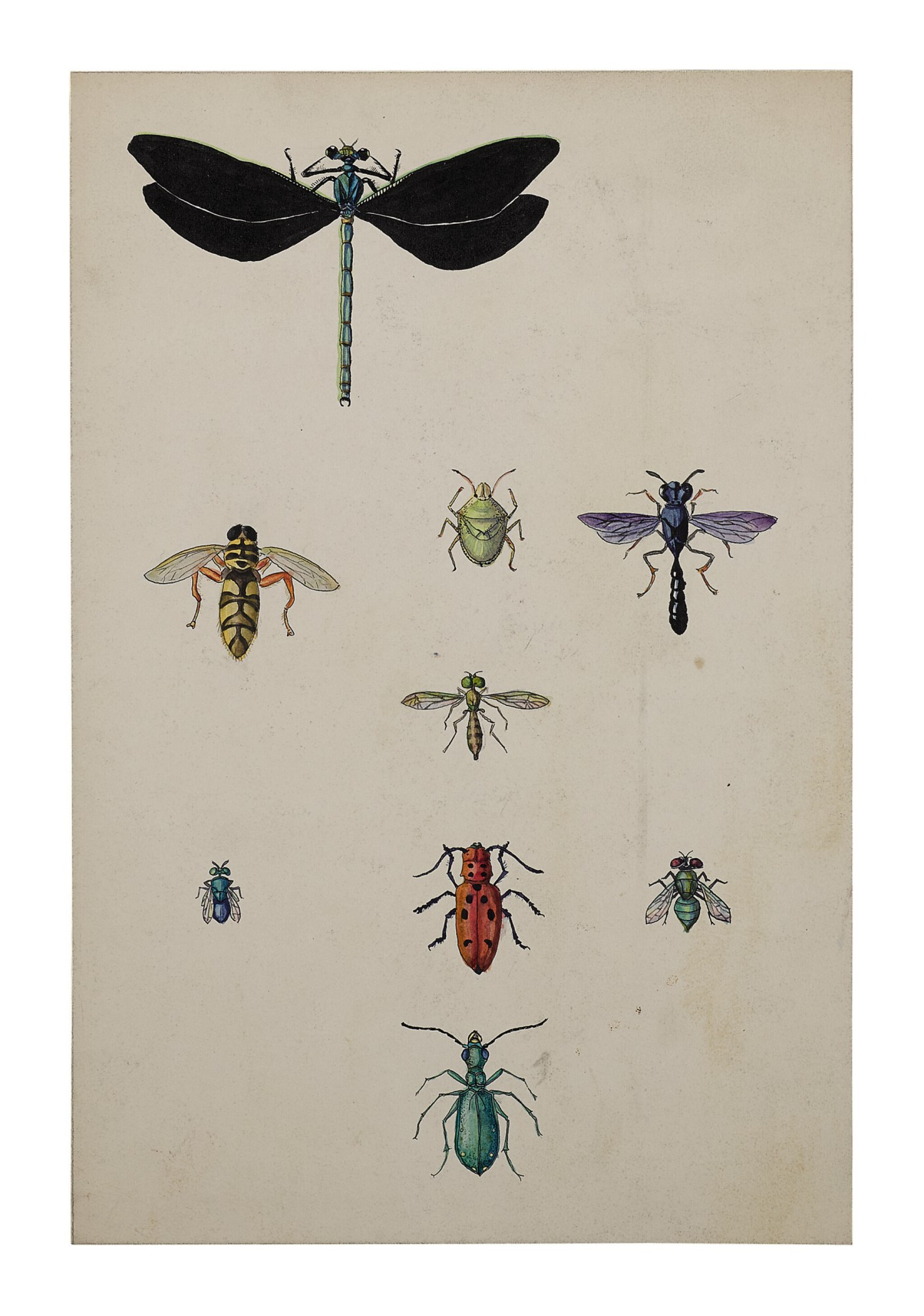 View full screen - View 1 of Lot 6. DAMSELFLY, HOVERFLY, STINKBUG, SPHECID WASP, LONG-HORN BEETLE, HALICTID BEE, XYLOPHAGID FLY, TIGER BEETLE.