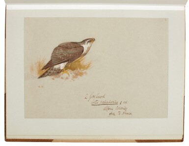 View 3. Thumbnail of Lot 33. Archibald Thorburn | An album containing eight original drawings of birds of prey.
