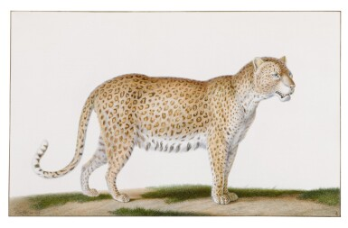 View 1. Thumbnail of Lot 80. A Leopard.