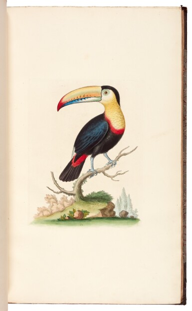 EDWARDS | A natural history of birds [Gleanings of natural history], 1802–1806 (watermarks 1816–1824)
