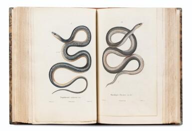 View 2. Thumbnail of Lot 215. LAPLACE. Voyage autour du monde de l'Inde et de Chine. 1833-1840. 7 volumes, dont 2 atlas et Zoologie..