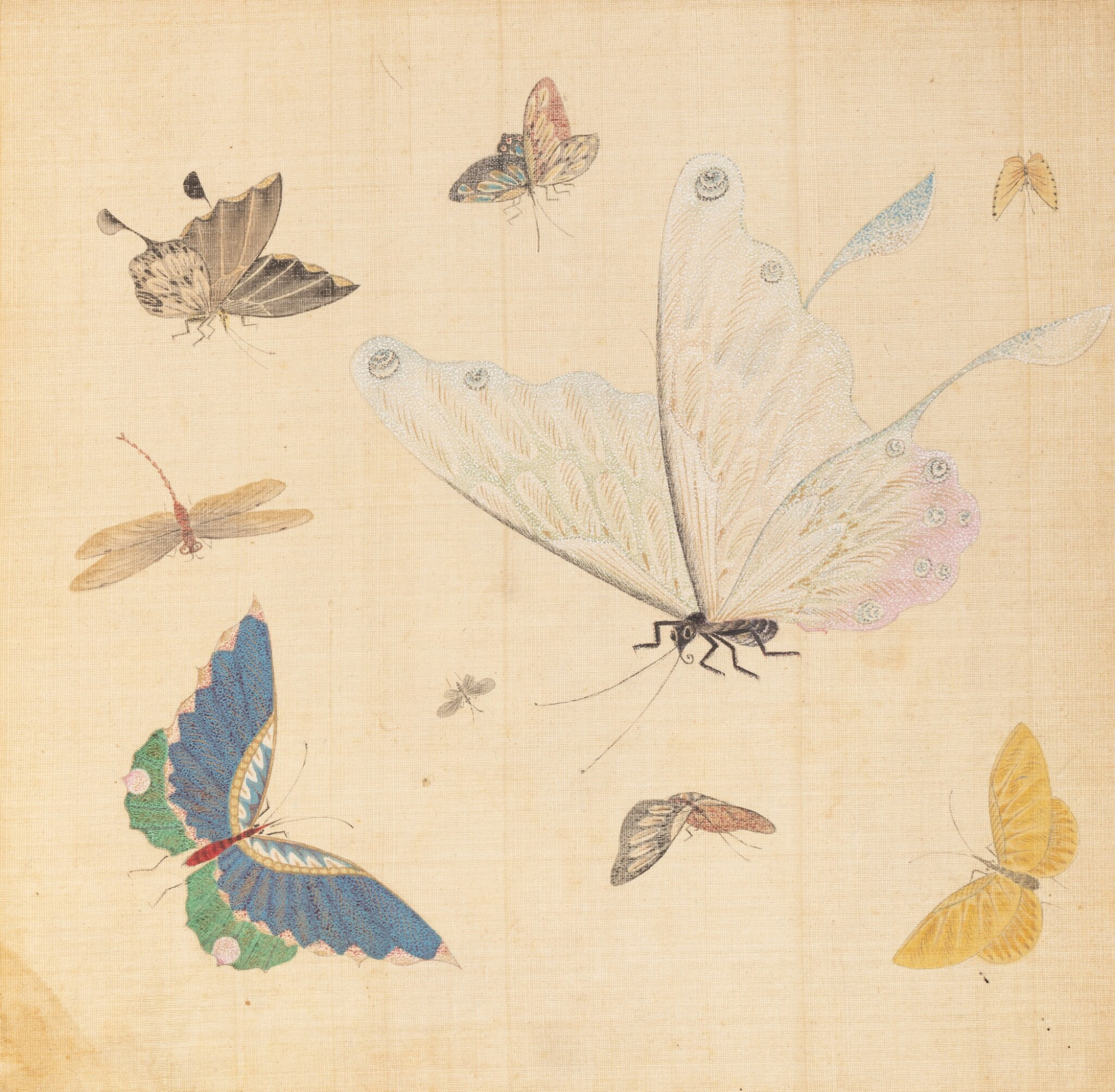 View full screen - View 1 of Lot 290. Study of butterflies, China, 19th century.
