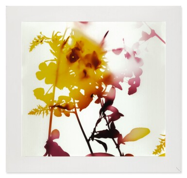 View 2. Thumbnail of Lot 50. JAMES WELLING | 'UNTITLED' (FLOWERS).