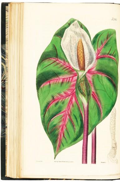 Curtis | The Botanical Magazine; or Flower-Garden Displayed, 1815-1848, 42 volumes