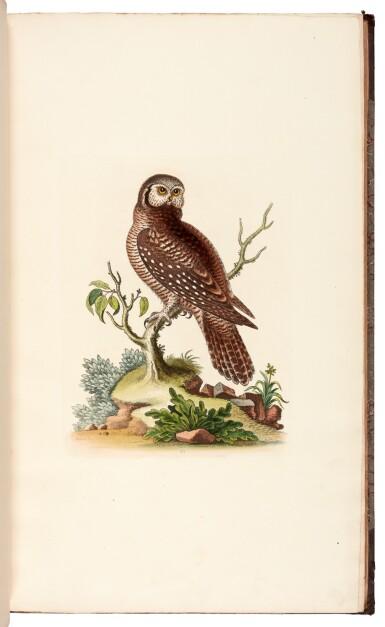 View 3. Thumbnail of Lot 28. EDWARDS   A natural history of birds [Gleanings of natural history], 1802–1806 (watermarks 1816–1824).
