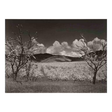 View 1. Thumbnail of Lot 103. 'Orchard, South of San Jose, California'.