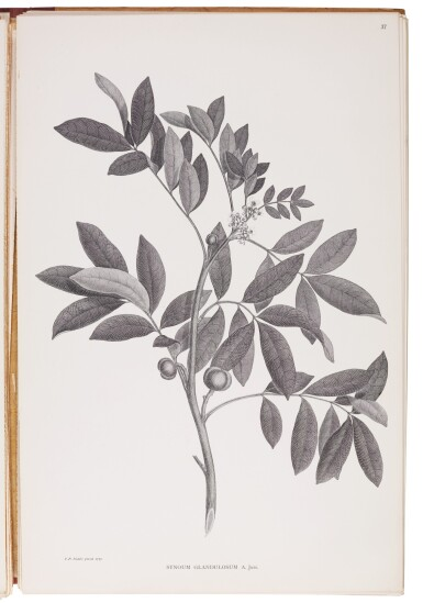 Banks and Solander | Illustrations of the botany of Captain Cook's voyage. 1900-1905, 3 volumes