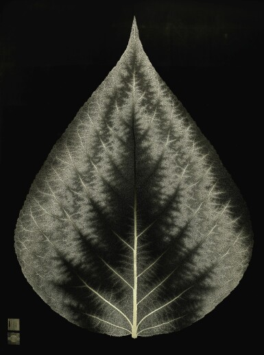 View 4. Thumbnail of Lot 167. DR GREG DUNN & DR BRIAN EDWARDS | PHOTOSYNTHESIS.
