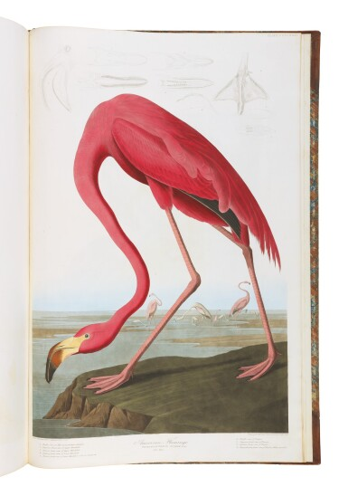 View 15. Thumbnail of Lot 250. JOHN JAMES AUDUBON | The Birds of America; from Original Drawings by John James Audubon. London: Published by the Author, 1827–1838.