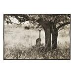 PETER BEARD   SELECTED IMAGES OF KENYAN WILDLIFE