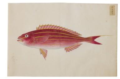 View 15. Thumbnail of Lot 118. ATTRIBUTED TO KAWAHARA KEIGA (1786–1860) STUDIO, EDO PERIOD, 19TH CENTURY, A GROUP OF TWENTY-FOUR FISH.