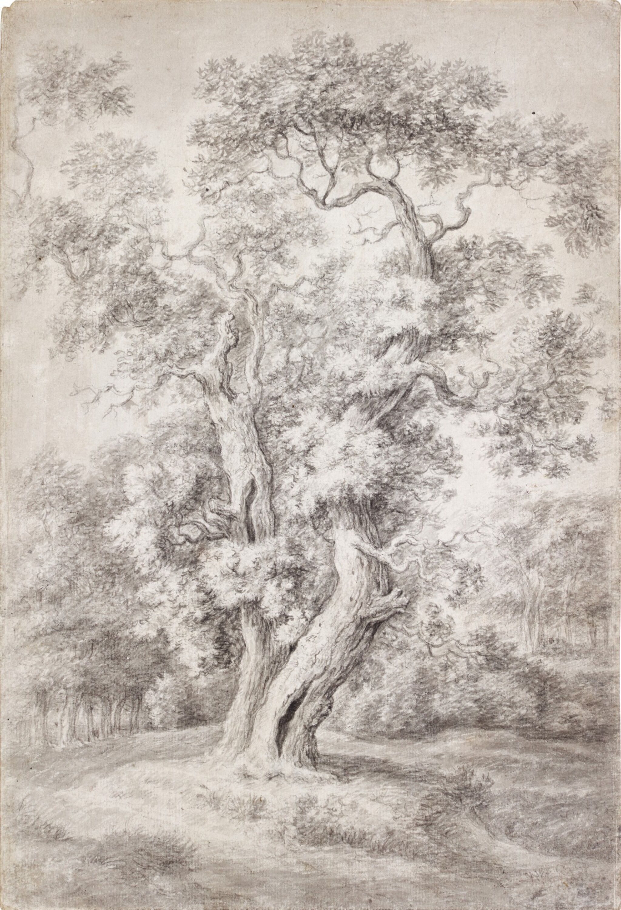 View full screen - View 1 of Lot 43. Study of an Oak Tree in Woodland.
