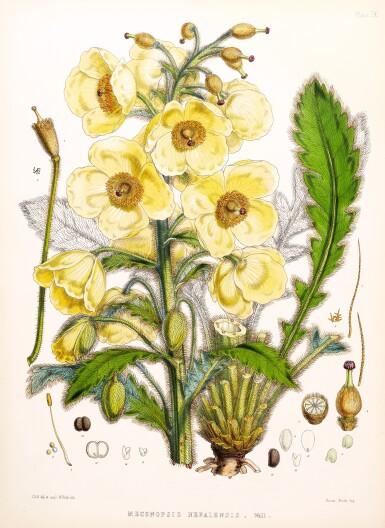 View 1. Thumbnail of Lot 334. Hooker. Illustrations of Himalayan Plants. 1855.