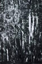 WOLFGANG TILLMANS | TREES, 2008