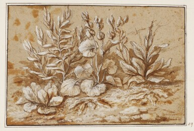 View 1. Thumbnail of Lot 543. FOLLOWER OF CLAUDE GELLÉE, CALLED CLAUDE LORRAIN | A group of borage, mullein and other plants.