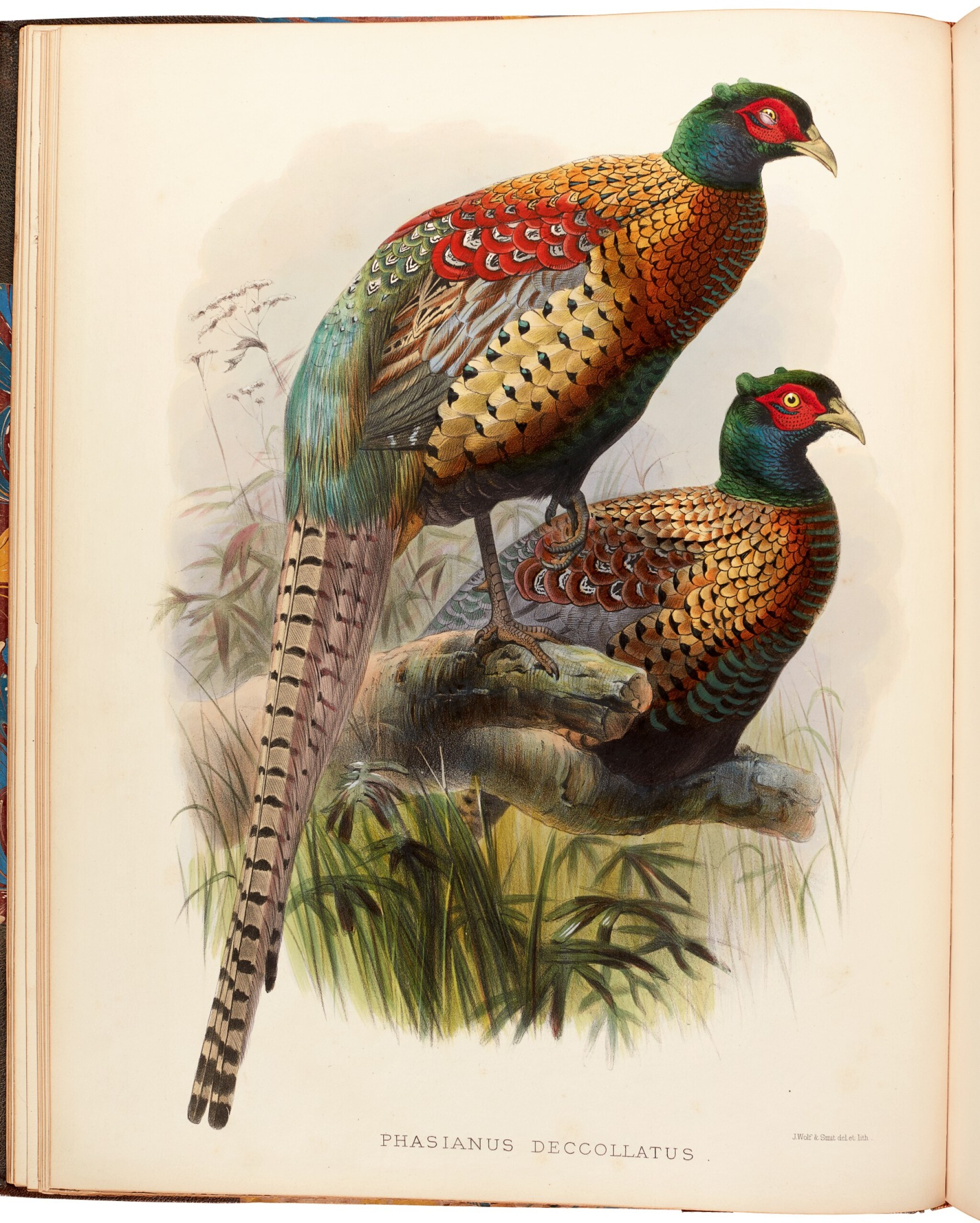 View full screen - View 1 of Lot 9. Daniel Giraud Elliot | Monograph of the Phasianidae, or Family of the Pheasants, 1870-1872, coloured plates.