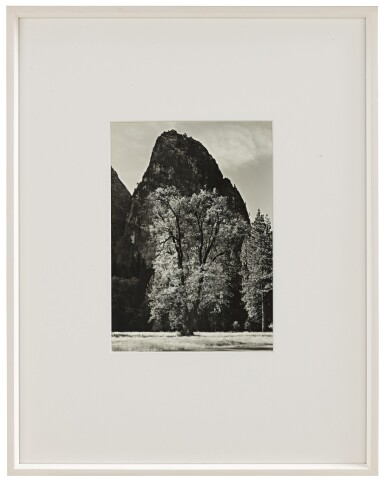 View 2. Thumbnail of Lot 82. Oak Tree, Autumn, Yosemite Valley, CA.