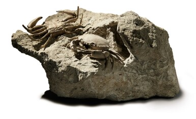 A FINE PAIR OF CRAB FOSSILS