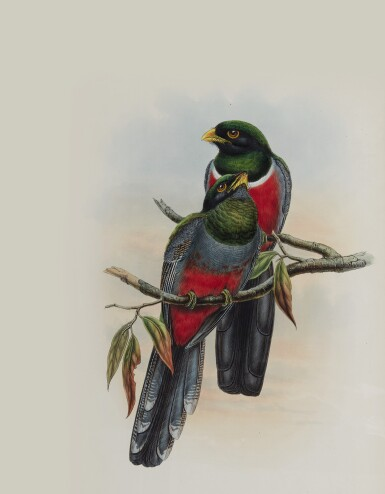GOULD, JOHN | A Monograph of the Trogonidae, or Family of Trogons. London...