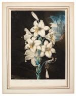 [Thornton   The Temple of Flora], 6 botanical plates