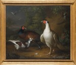 TOBIAS STRANOVER   Pheasants, doves and a great tit in a landscape setting