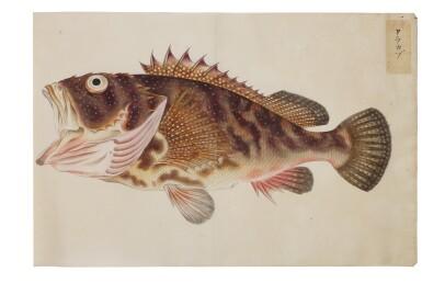 View 22. Thumbnail of Lot 118. ATTRIBUTED TO KAWAHARA KEIGA (1786–1860) STUDIO, EDO PERIOD, 19TH CENTURY, A GROUP OF TWENTY-FOUR FISH.
