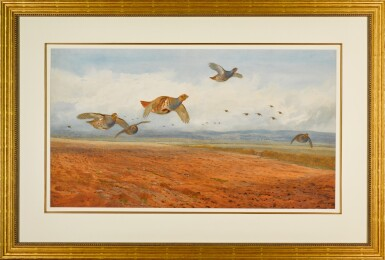 View 2. Thumbnail of Lot 139. A Covey of Grey Partridge in Flight.