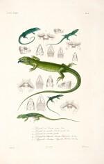 Bory de Saint-Vincent | Expédition scientifique de Morée, 1832-1836, 3 volumes of text bound in 4 and atlas