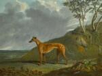A brindle Greyhound bitch in a landscape