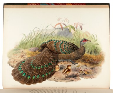 View 2. Thumbnail of Lot 31. ELLIOT, D.G.   A Monograph of the Phasianidae, New York 1870-1872, 2 volumes.