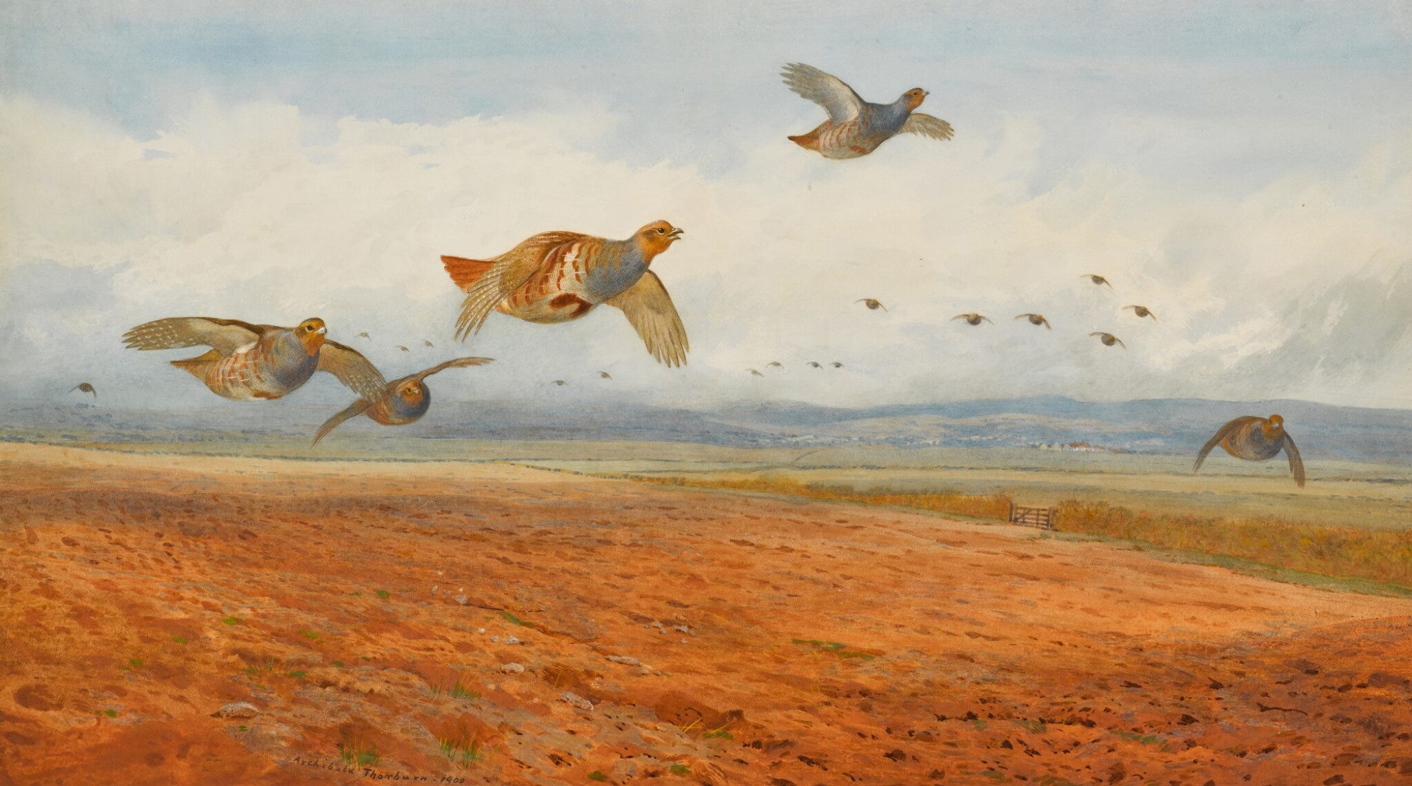View 1 of Lot 139. A Covey of Grey Partridge in Flight.