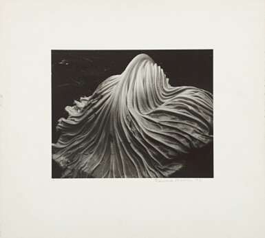 View 2. Thumbnail of Lot 16. 'Cabbage - leaf'.