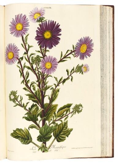 View 3. Thumbnail of Lot 52. Trew   Hortus Nitidissimis, 1750-1786.