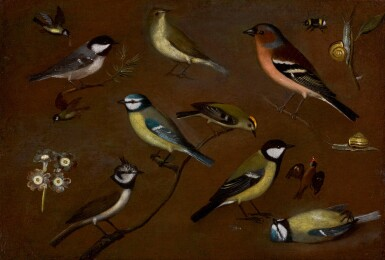 View 1. Thumbnail of Lot 28. ORSOLA MADDALENA CACCIA  | Still life of birds, including a marsh tit, chiffchaff, chaffinch, blue tits, goldrest, lapwing and a great tit.