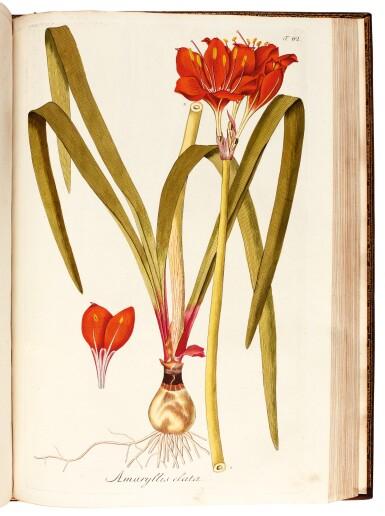View 9. Thumbnail of Lot 21. Jacquin   Plantarum rariorum Horti Caesarei Schönbrunnensis descriptiones et icones. 1797–1804, 4 volumes.