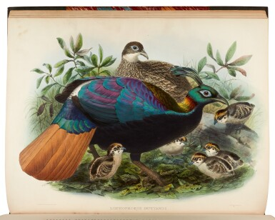 View 3. Thumbnail of Lot 31. ELLIOT, D.G.   A Monograph of the Phasianidae, New York 1870-1872, 2 volumes.