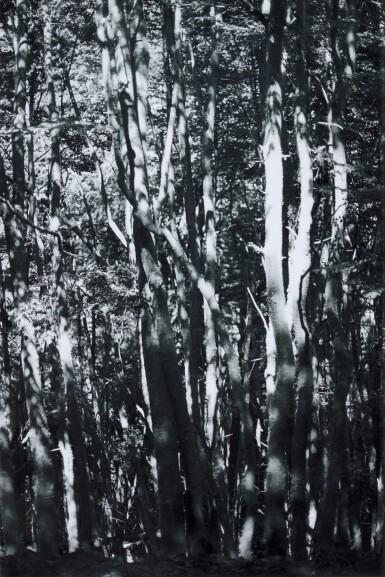View 1. Thumbnail of Lot 47. WOLFGANG TILLMANS | TREES, 2008.