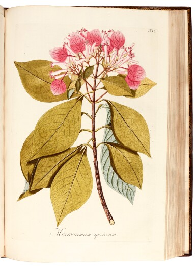 View 7. Thumbnail of Lot 21. Jacquin   Plantarum rariorum Horti Caesarei Schönbrunnensis descriptiones et icones. 1797–1804, 4 volumes.