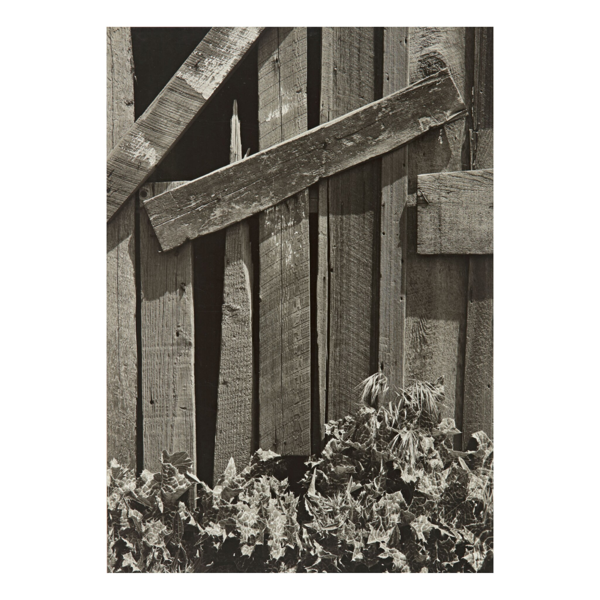 View full screen - View 1 of Lot 43. ANSEL ADAMS | 'BOARDS AND THISTLES'.