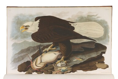 View 3. Thumbnail of Lot 250. JOHN JAMES AUDUBON | The Birds of America; from Original Drawings by John James Audubon. London: Published by the Author, 1827–1838.