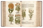 Gerard | The Herball or Generall Historie of Plantes, 1597