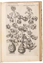 Sweert | Florilegium amplissimum et selectissimum, 1641–1631