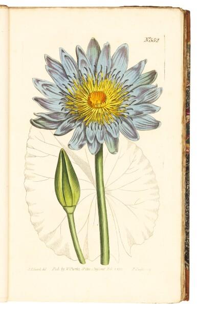 View 2. Thumbnail of Lot 5. Curtis   The Botanical Magazine; or Flower-Garden Displayed, 1790–1788–1805, 20 volumes.