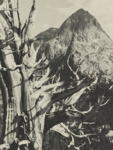 View 6. Thumbnail of Lot 47. The Sierra Club Outing, 1930.